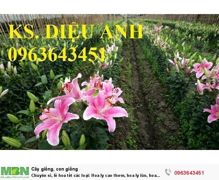 Chuyên sỉ, lẻ hoa tết các loại: Hoa ly cao thơm, hoa ly lùn, hoa tuylip, hoa lan hồ điệp, hoa tiên ông3