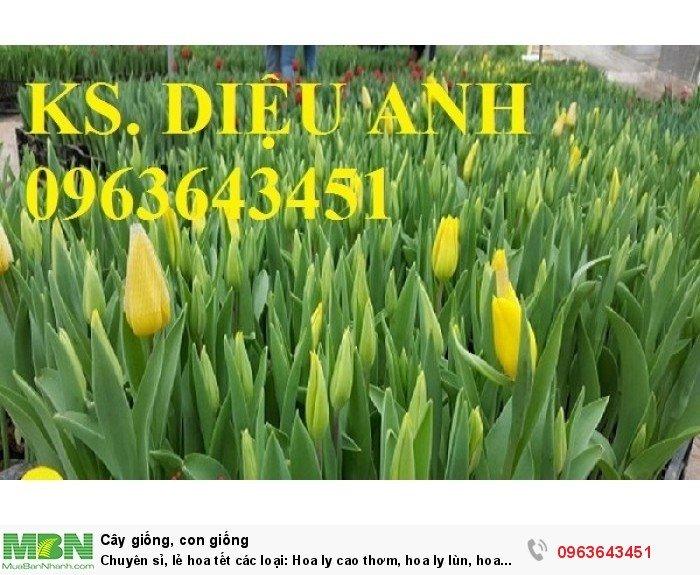 Chuyên sỉ, lẻ hoa tết các loại: Hoa ly cao thơm, hoa ly lùn, hoa tuylip, hoa lan hồ điệp, hoa tiên ông5