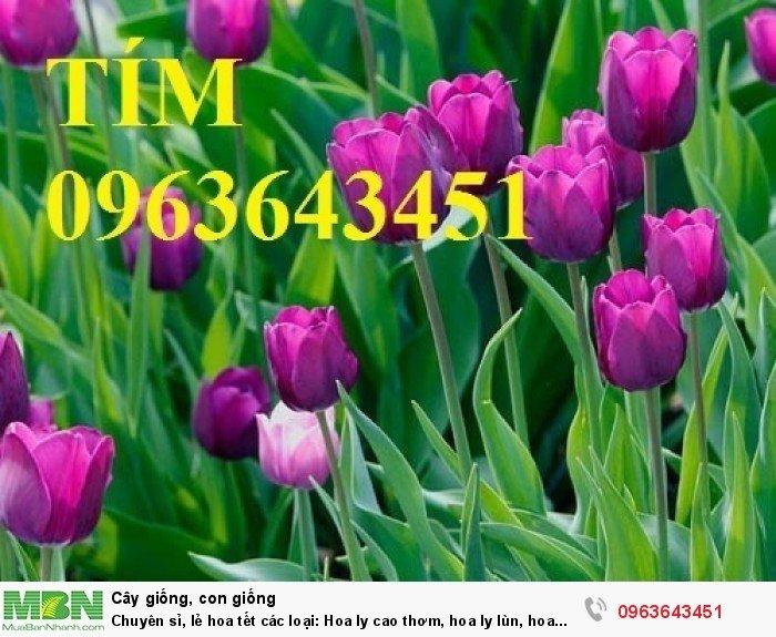 Chuyên sỉ, lẻ hoa tết các loại: Hoa ly cao thơm, hoa ly lùn, hoa tuylip, hoa lan hồ điệp, hoa tiên ông6