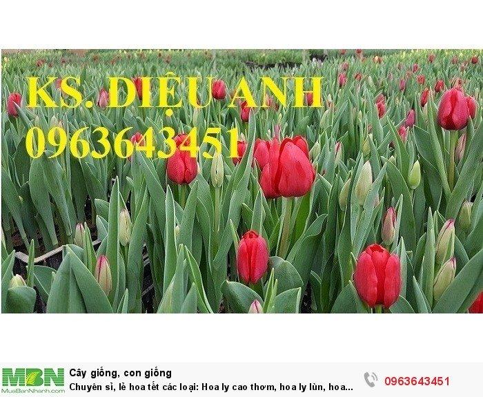 Chuyên sỉ, lẻ hoa tết các loại: Hoa ly cao thơm, hoa ly lùn, hoa tuylip, hoa lan hồ điệp, hoa tiên ông7