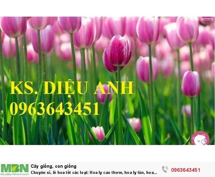 Chuyên sỉ, lẻ hoa tết các loại: Hoa ly cao thơm, hoa ly lùn, hoa tuylip, hoa lan hồ điệp, hoa tiên ông9