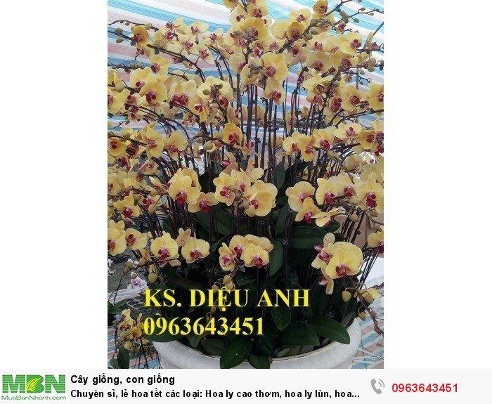 Chuyên sỉ, lẻ hoa tết các loại: Hoa ly cao thơm, hoa ly lùn, hoa tuylip, hoa lan hồ điệp, hoa tiên ông11