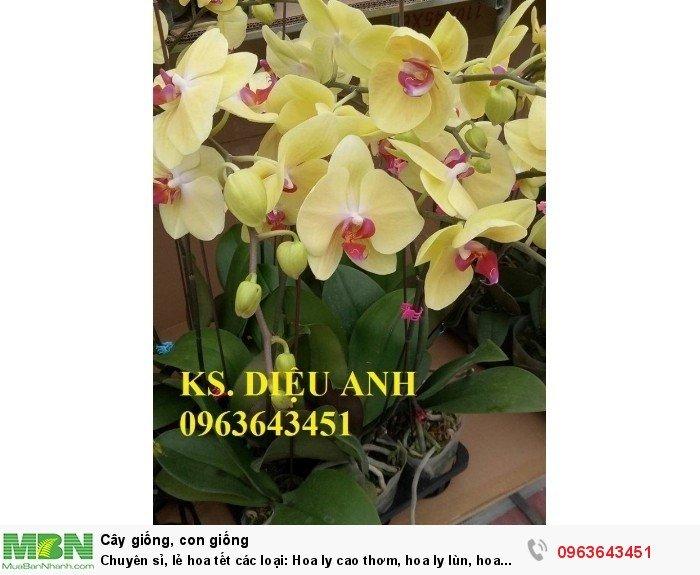 Chuyên sỉ, lẻ hoa tết các loại: Hoa ly cao thơm, hoa ly lùn, hoa tuylip, hoa lan hồ điệp, hoa tiên ông10