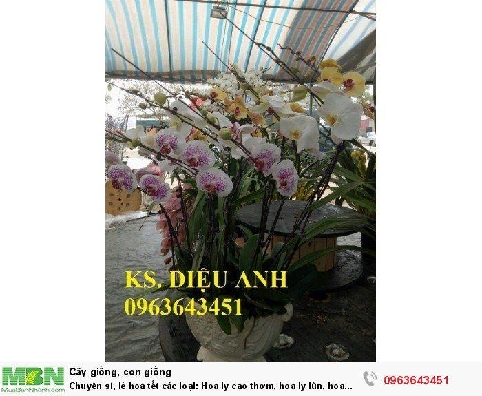 Chuyên sỉ, lẻ hoa tết các loại: Hoa ly cao thơm, hoa ly lùn, hoa tuylip, hoa lan hồ điệp, hoa tiên ông12