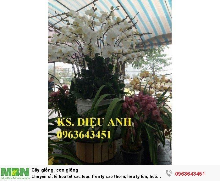 Chuyên sỉ, lẻ hoa tết các loại: Hoa ly cao thơm, hoa ly lùn, hoa tuylip, hoa lan hồ điệp, hoa tiên ông13