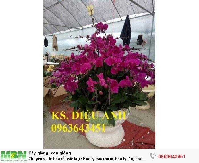 Chuyên sỉ, lẻ hoa tết các loại: Hoa ly cao thơm, hoa ly lùn, hoa tuylip, hoa lan hồ điệp, hoa tiên ông15