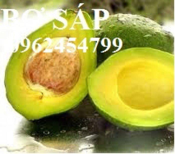 Địa chỉ cung cấp các loại giống cây bơ, bơ sáp, bơ booth, bơ 034, bơ hass chuẩn giống f14