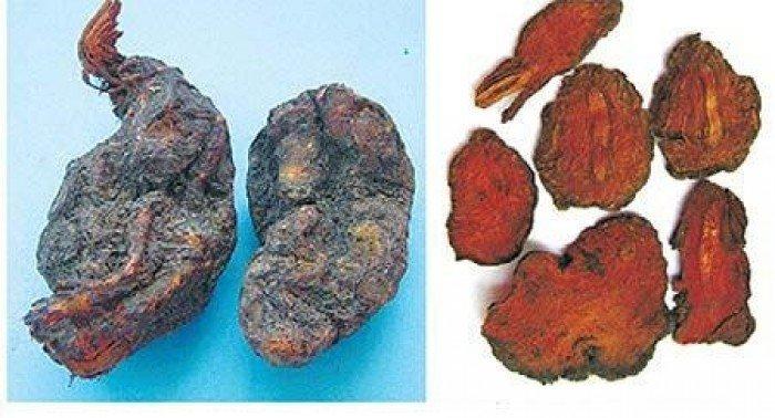 Cung cấp giống cây dược liệu cây hà thủ ô, hà thủ ô đỏ, chất lượng, uy tín3