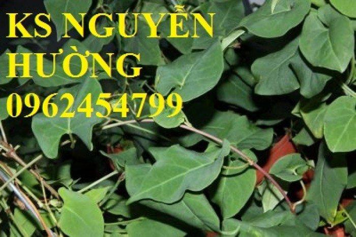 Bán cây hà thủ ô làm thuốc, địa chỉ cung cấp các loại cây giống chất lượng - giao cây toàn quốc2