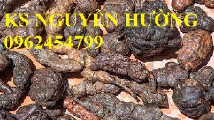 Bán cây hà thủ ô làm thuốc, địa chỉ cung cấp các loại cây giống chất lượng - giao cây toàn quốc3
