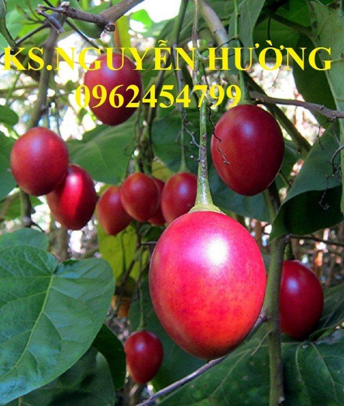 Bán cây giống cà chua thân gỗ, địa chỉ cung cấp cây chất lượng, chuẩn giống - giao cây toàn quốc0