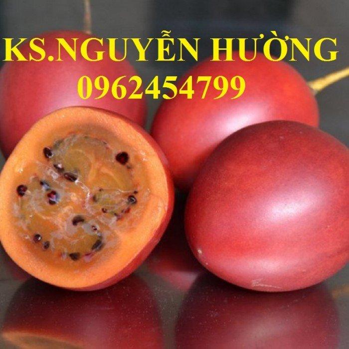 Bán cây giống cà chua thân gỗ, địa chỉ cung cấp cây chất lượng, chuẩn giống - giao cây toàn quốc4