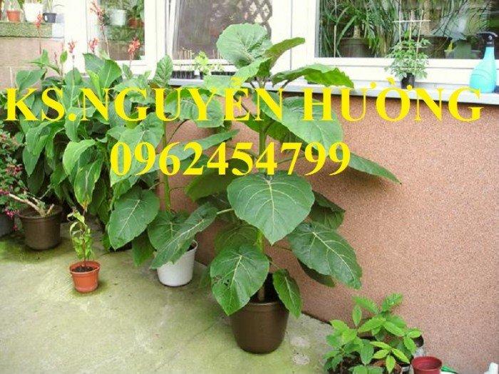 Bán cây giống cà chua thân gỗ, địa chỉ cung cấp cây chất lượng, chuẩn giống - giao cây toàn quốc5