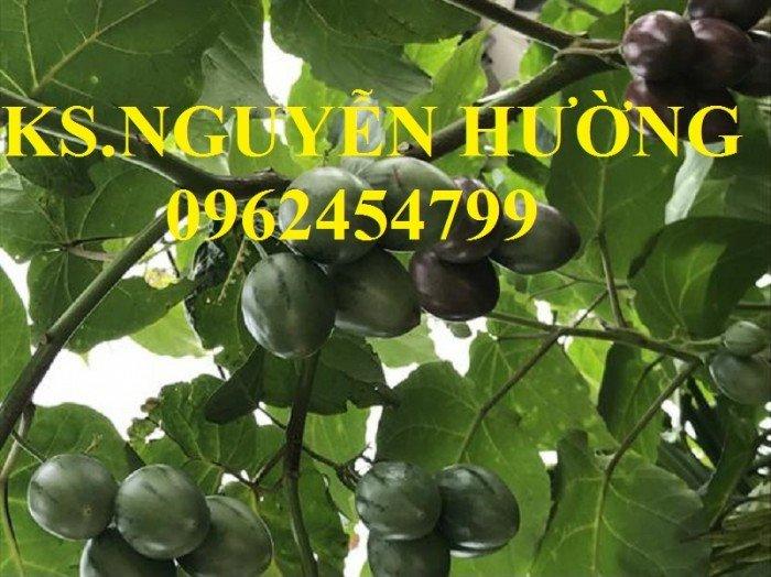 Bán cây giống cà chua thân gỗ, địa chỉ cung cấp cây chất lượng, chuẩn giống - giao cây toàn quốc3