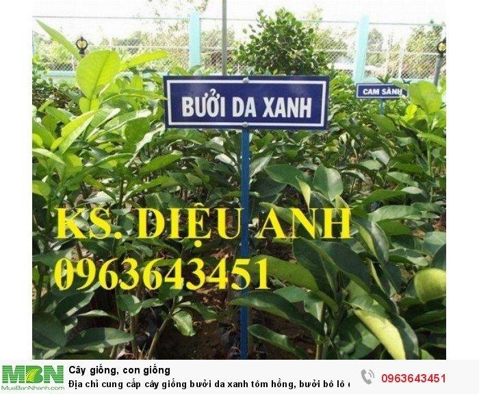 Địa chỉ cung cấp cây giống bưởi da xanh tôm hồng, bưởi bô lô da xanh uy tín, chuẩn giống, chất lượng cao2