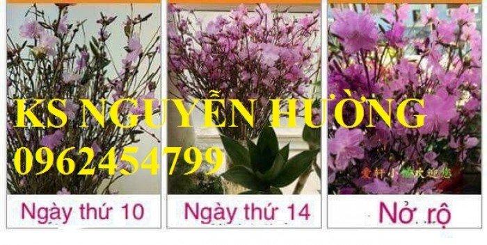 Cung cấp số lượng lớn hoa đỗ quyên, cành hoa đỗ quyên khô đẹp chơi tết 2018 - giao hoa toàn quốc4