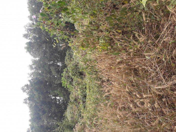 Gia đình có công việc nên cần bán đất Thiện Tân . 2155m2. Sổ hồng riêng