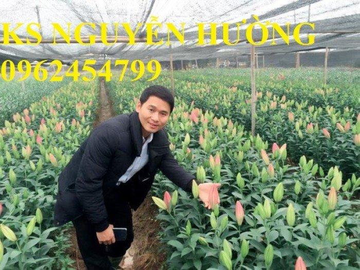 Địa chỉ cung cấp số lượng lớn hoa lyly, hoa lyly cao, hoa lyly lùn chơi tết chuẩn chất lượng0
