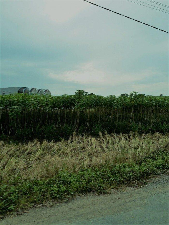 Mại Zô... Bán 3000m2 Đồng Khoai Mì, Thích Thiện Hòa, Bình Chánh