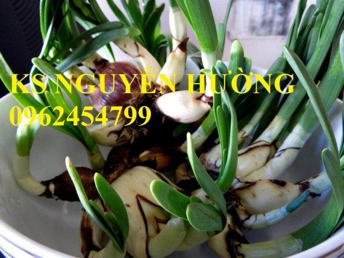 Hoa thủy tiên. kỹ thuật trồng và chăm sóc hoa thủy tiên. địa chỉ cung cấp hoa cây cảnh toàn quốc2