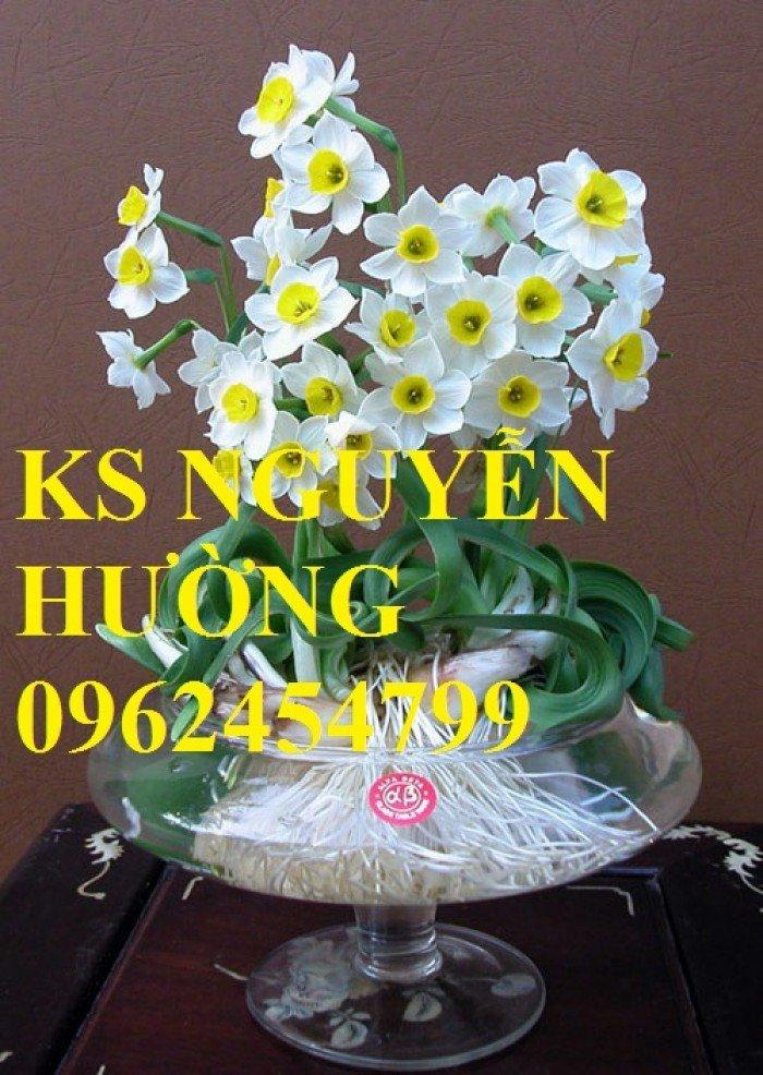Hoa thủy tiên. kỹ thuật trồng và chăm sóc hoa thủy tiên. địa chỉ cung cấp hoa cây cảnh toàn quốc0