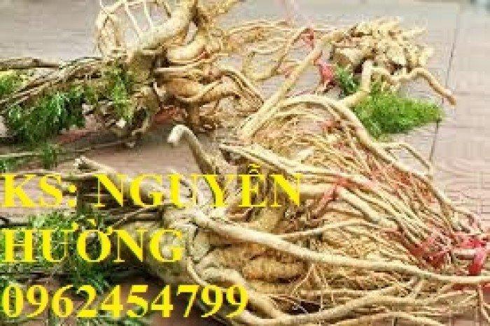 Cung cấp số lượng lớn rễ đinh lăng, cành đinh lăng. địa chỉ cung cấp cây giống, hoa cây cảnh toàn quốc4