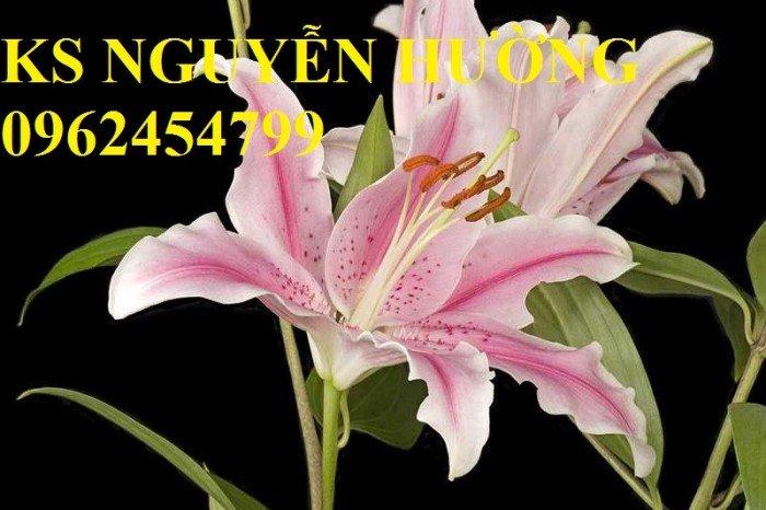 Hoa lyly, ý nghĩa hoa lyly, những điều bí ẩn cần khám phá hoa lyly4