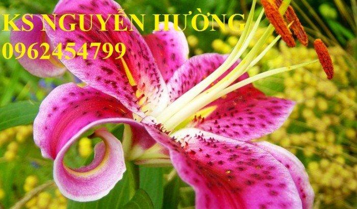 Hoa lyly, ý nghĩa hoa lyly, những điều bí ẩn cần khám phá hoa lyly6