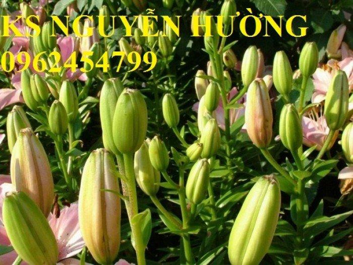 Hoa lyly, ý nghĩa hoa lyly, những điều bí ẩn cần khám phá hoa lyly0