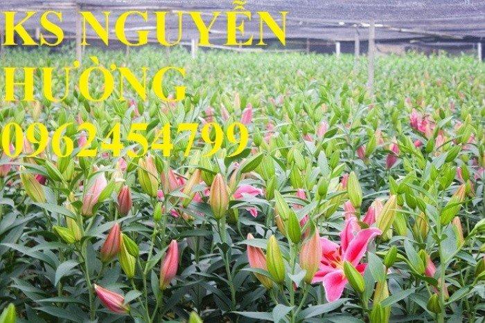 Hoa lyly, ý nghĩa hoa lyly, những điều bí ẩn cần khám phá hoa lyly2