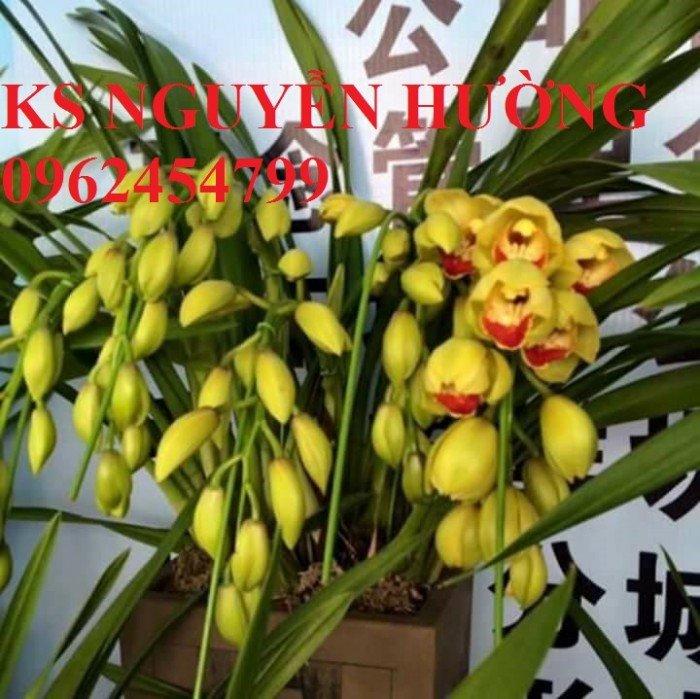 Hoa địa lan, địa lan chơi Tết, địa chỉ cung cấp hoa cây cảnh toàn quốc9