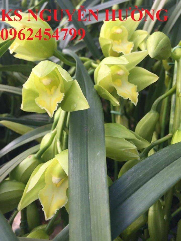 Hoa địa lan, địa lan chơi Tết, địa chỉ cung cấp hoa cây cảnh toàn quốc4
