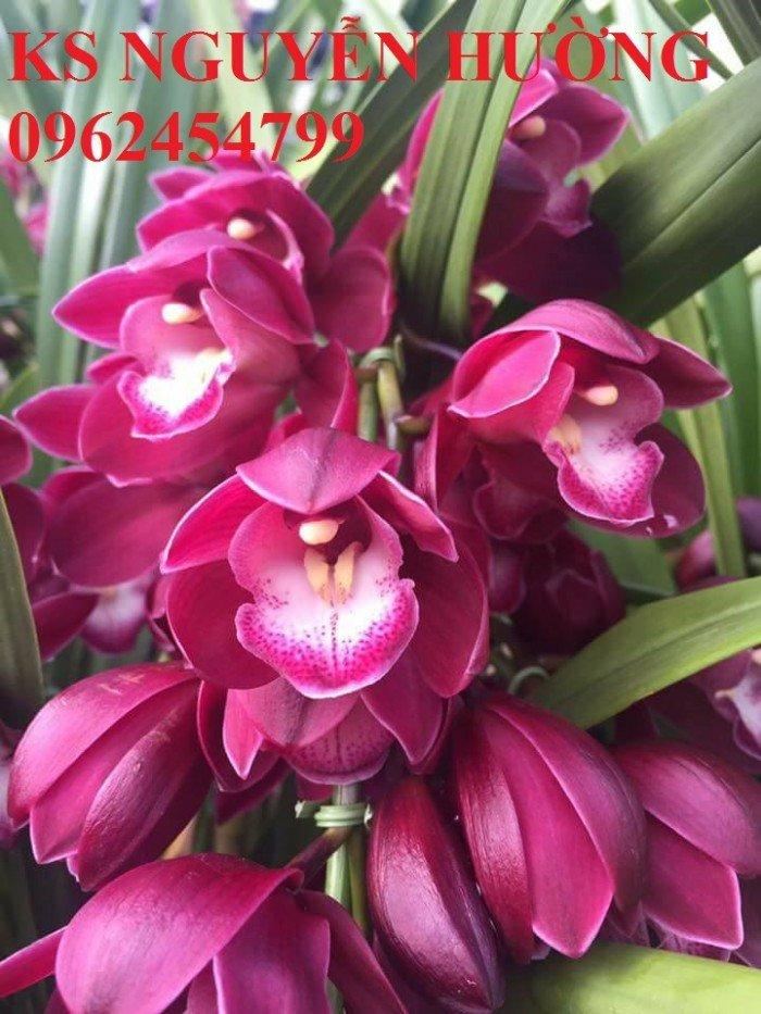 Hoa địa lan, địa lan chơi Tết, địa chỉ cung cấp hoa cây cảnh toàn quốc5