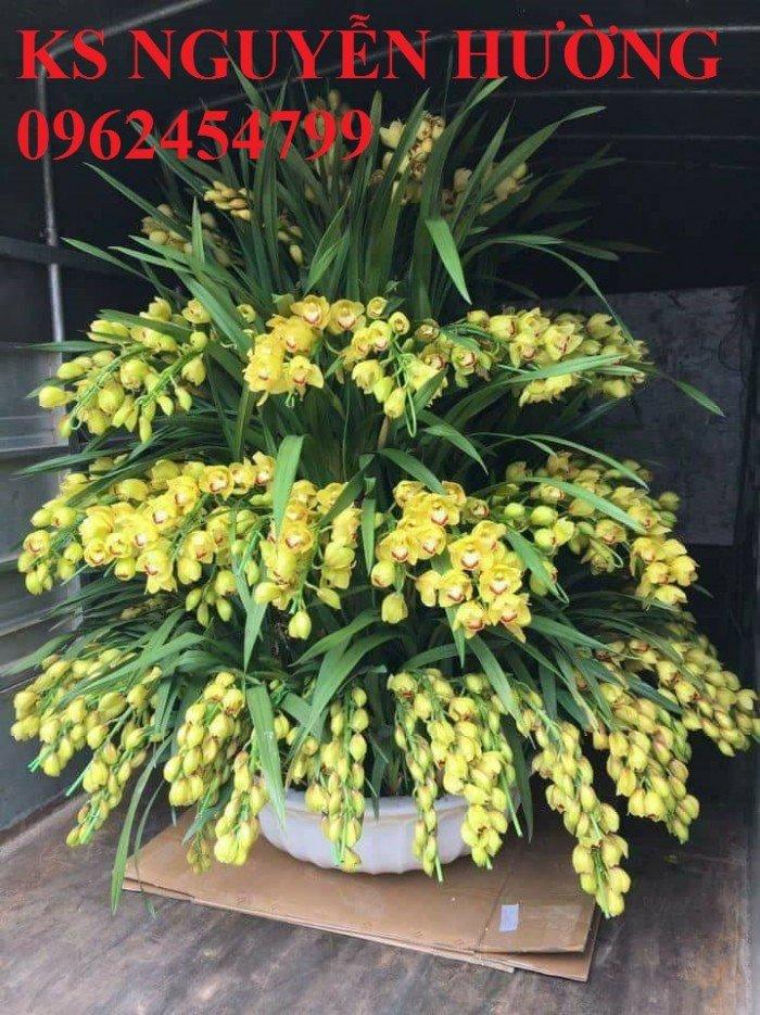 Hoa địa lan, địa lan chơi Tết, địa chỉ cung cấp hoa cây cảnh toàn quốc1