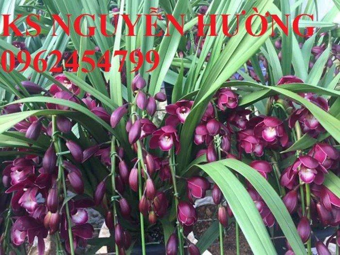 Hoa địa lan, địa lan chơi Tết, địa chỉ cung cấp hoa cây cảnh toàn quốc8