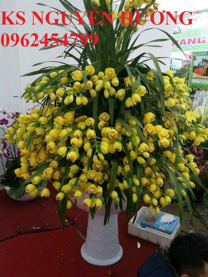 Hoa địa lan, địa lan chơi Tết, địa chỉ cung cấp hoa cây cảnh toàn quốc2
