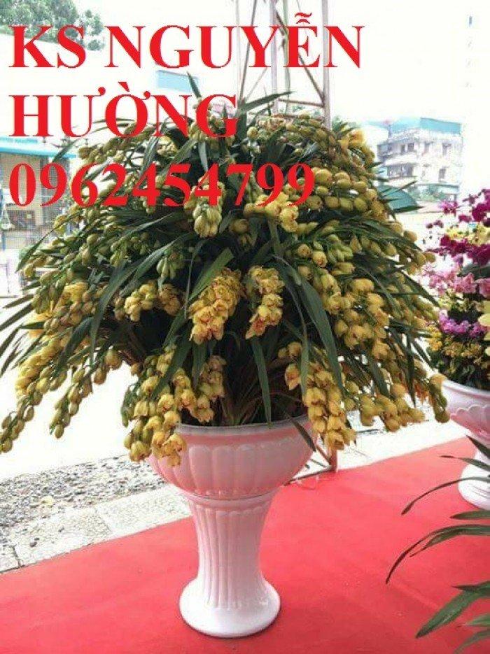 Hoa địa lan, địa lan chơi Tết, địa chỉ cung cấp hoa cây cảnh toàn quốc6