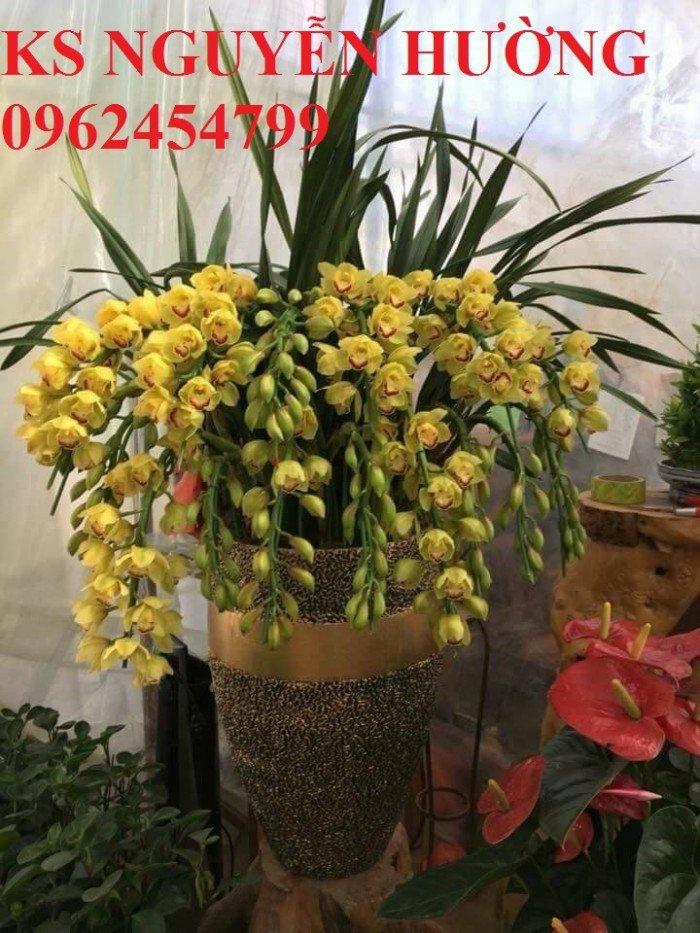 Hoa địa lan, địa lan chơi Tết, địa chỉ cung cấp hoa cây cảnh toàn quốc7