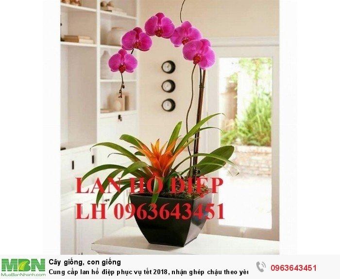 Cung cấp lan hồ điệp phục vụ tết, nhận ghép chậu theo yêu cầu, đảm bảo hoa đẹp, chất lượng cao0