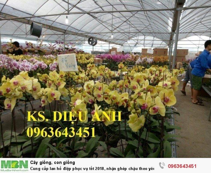 Cung cấp lan hồ điệp phục vụ tết, nhận ghép chậu theo yêu cầu, đảm bảo hoa đẹp, chất lượng cao22