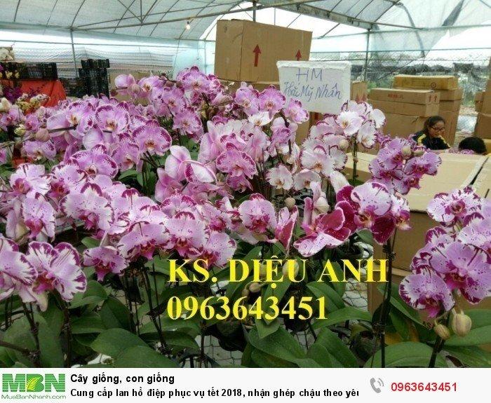 Cung cấp lan hồ điệp phục vụ tết, nhận ghép chậu theo yêu cầu, đảm bảo hoa đẹp, chất lượng cao23