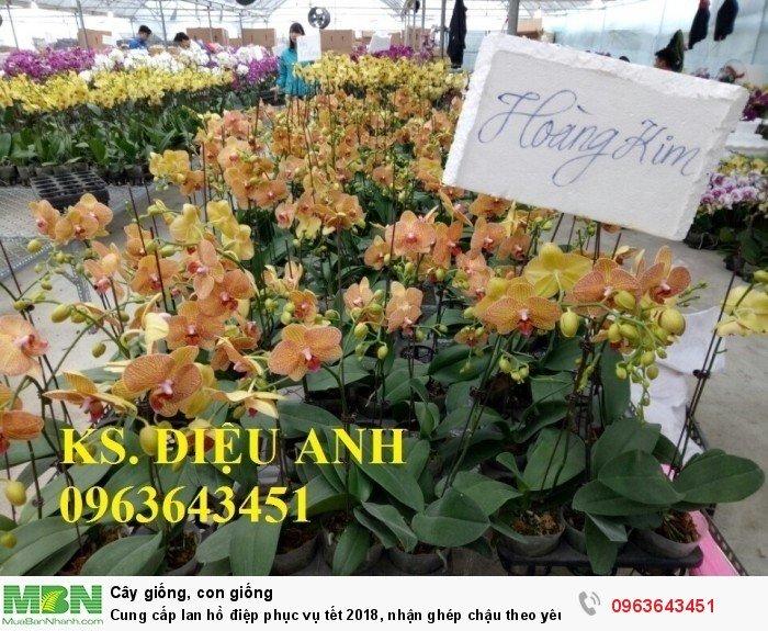 Cung cấp lan hồ điệp phục vụ tết, nhận ghép chậu theo yêu cầu, đảm bảo hoa đẹp, chất lượng cao30