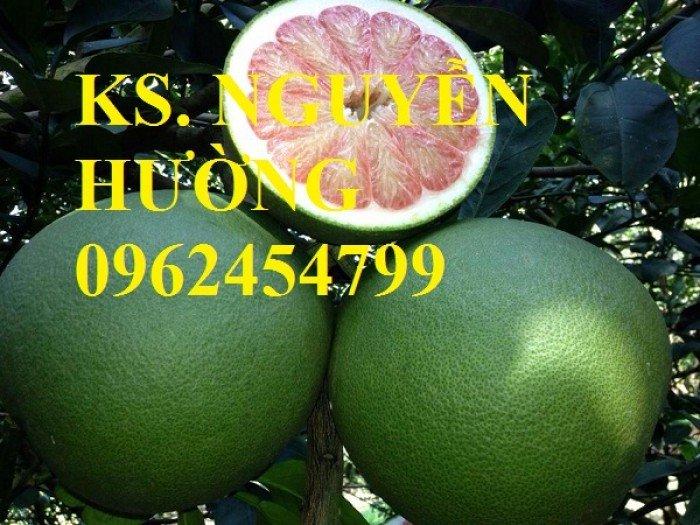 Cung cấp cây giống bưởi da xanh chuẩn giống, chất lượng. chuyên cung cấp cây giống uy tín1