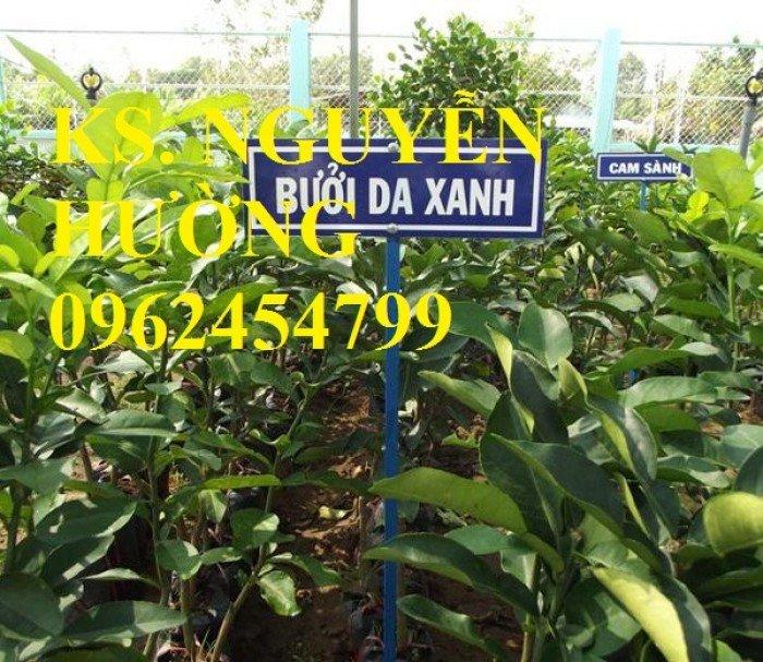 Cung cấp cây giống bưởi da xanh chuẩn giống, chất lượng. chuyên cung cấp cây giống uy tín0