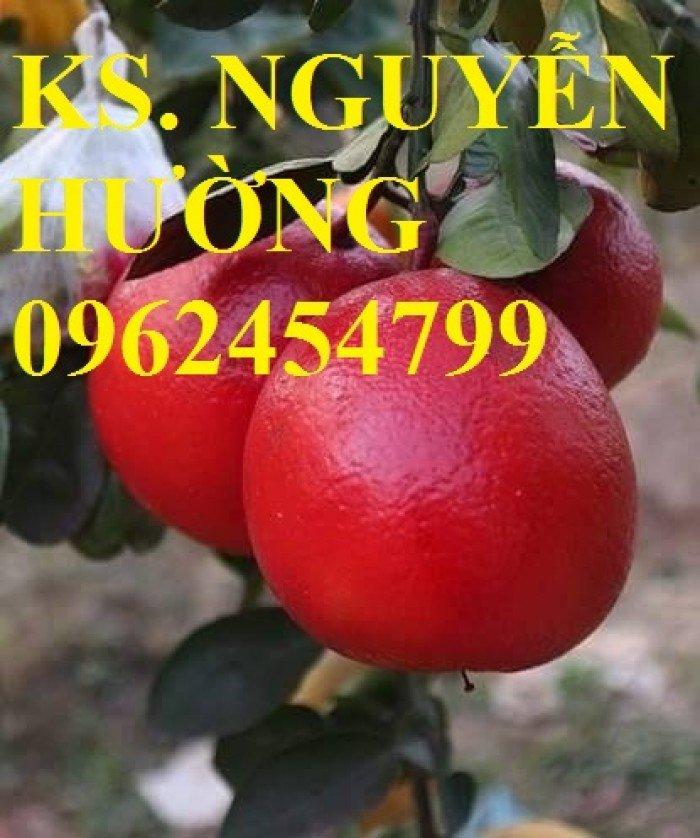 Mua cây giống bưởi đỏ luận văn ở đâu chuẩn giống, cây giống chất lượng. địa chỉ cung cấp cây giống uy tín - giao cây toàn quốc0