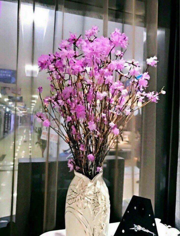 [7] Giống hoa đỗ quyên khô, đỗ quyên ngủ đông.