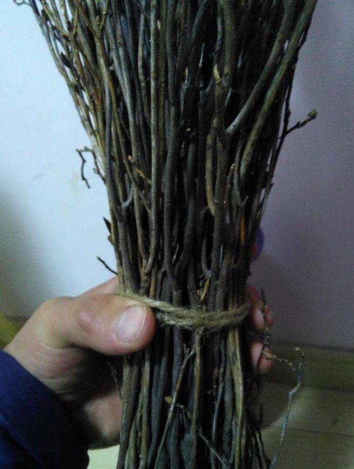 [10] Giống hoa đỗ quyên khô, đỗ quyên ngủ đông.