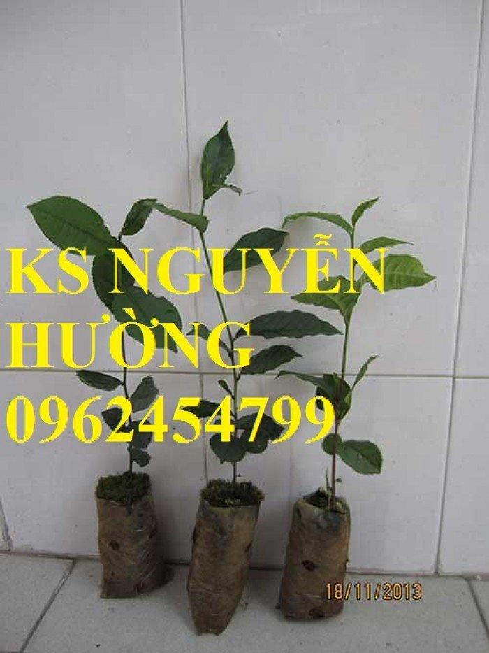Kỹ thuật trồng và chăm sóc cây trà xanh tại nhà. cung cấp số lượng lớn cây giống trà xanh0