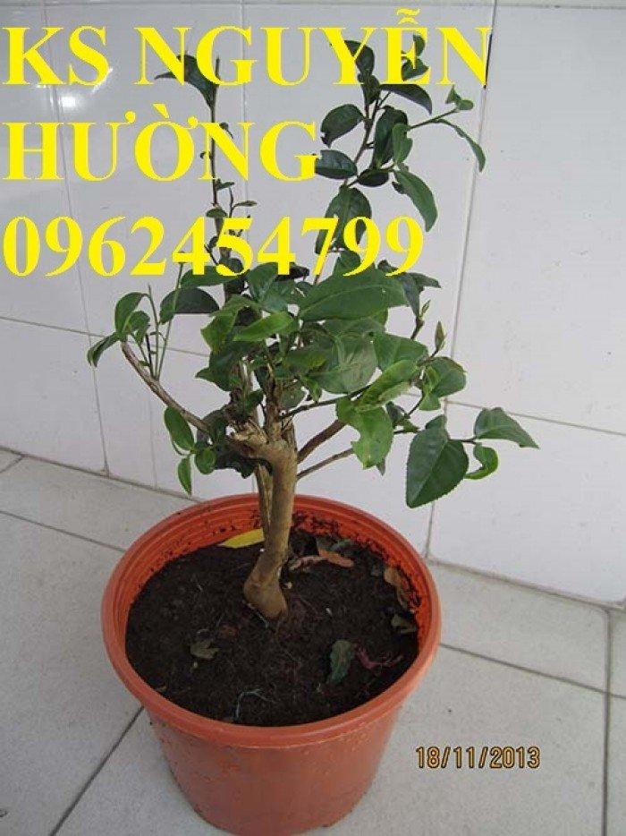 Kỹ thuật trồng và chăm sóc cây trà xanh tại nhà. cung cấp số lượng lớn cây giống trà xanh1