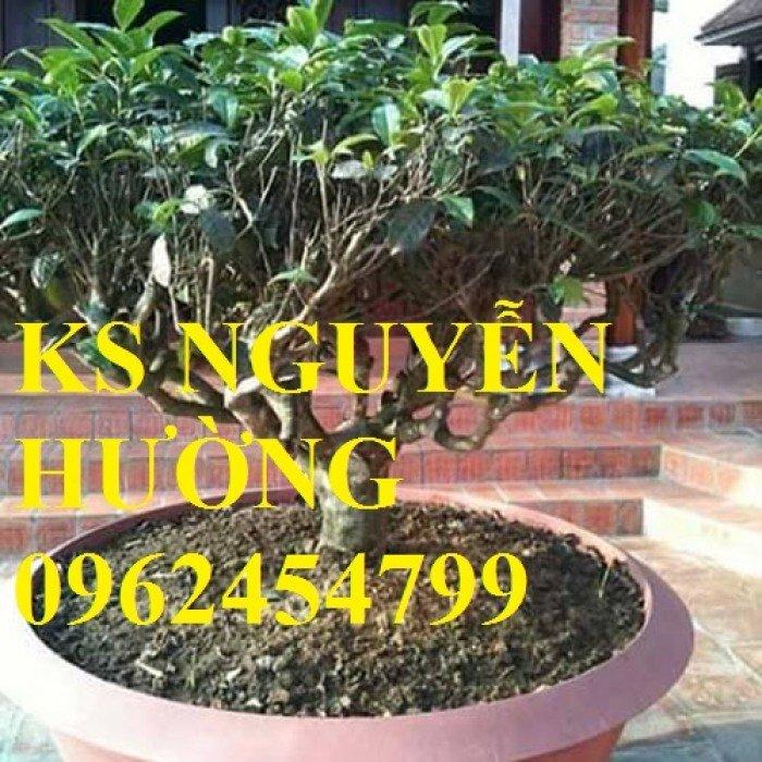 Kỹ thuật trồng và chăm sóc cây trà xanh tại nhà. cung cấp số lượng lớn cây giống trà xanh4